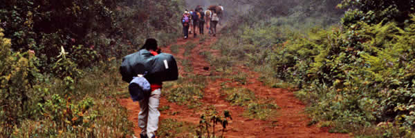 Trekking Mount Kilimajaro Through Forest Trail